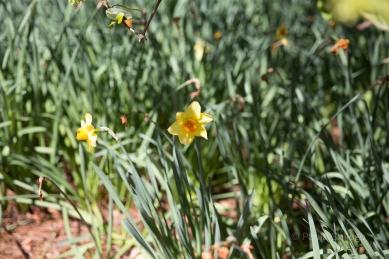 gibs gardens-4